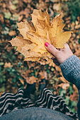 Female hand holding yellow autumn leaves