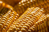 Corn on the cob kernels peeled close up