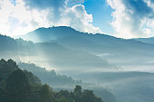 Pine forest on the mountain after raining with the fog.Doi Ang Khang Chiang Mai Thailand