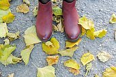 Female dark blue shoes on yellow autumn leaves.