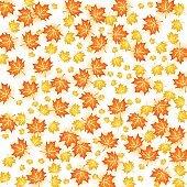 Autumn background illustration. Vector design of maple leaf fall on white