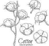 Hand drawn cotton flowers