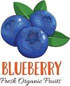 Vector blueberry illustration