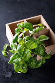 Fresh basil in wooden box