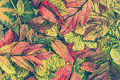 Autumn backgrounds with colorful fallen leaves, autumn wallpaper