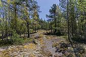 Northern forest. Karelia, Russia, June.