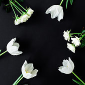 Frame of white tulips on black background. Flat lay, Top view