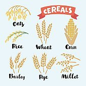 Vector illustration of cereal grains