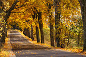 Autumn road in colorful countryside