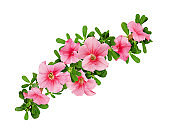 Wave arrangement of petunia flowers and leaves