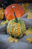 Beautiful decorative pumpkin close-up.
