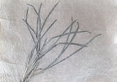 Korean traditional paper