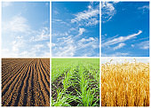 set with crop in fields. different seasons of the year