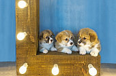 Three lovely puppies and the shining lamps.