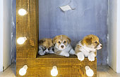 Three cute puppies in studio