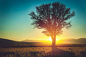 Silhouette of Lonely tree
