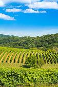 Countryside landscape, Daruvar region, Croatia