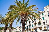 Palm trees in Split, Croatia