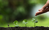 plant a tree,Grow coffee trees, freshness, hands protecting trees, watering, growing, green,