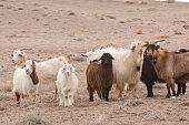 steppe, prairie, veldt, veld