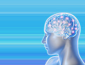 Human brain and nervous system. 3D illustration with copy space and blue background.