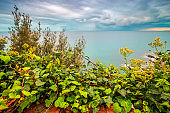 Lush foliage green leaves and seascape with cloudy sky.