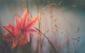 Background for Autumn with red maple leaves