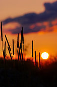 Grass Silhouette awe orange fire sunset background