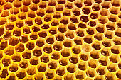 Fresh organic honey - healthy eating concept - close up studio shot