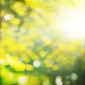 Summer Background with Green Foliage and Bokeh Glitter