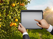 Agriculture and digital tablet