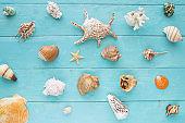 Seashells on a blue wooden planks
