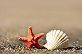 Seashell and starfish on the beach