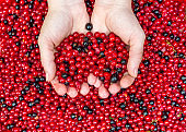 Currants in women palm over background of berries. Top view.