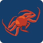 Red King Crab Icon. Steamed Crab illustration.