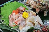 Sashimi of the shellfish