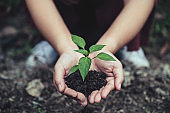 Closeup image of woman's hands holding soil and small tree to grow on the ground