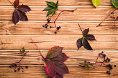Autumn background with wild grapes on a wooden table
