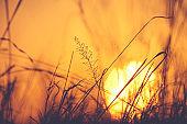 Sun rising behind grass.