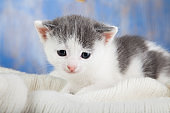 White kitten on a blanket comfortable Close-up.
