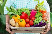 Senior woman holding fresh vegetable in basket