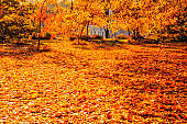 Beautiful Red Autumn Leaves Background