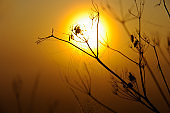 Sunrise variations