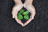 Hand of farmer holding sprout plant. Growing and nurturing tree on fertile soil. Ecology and Business financial concept.