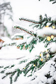 Snow-covered green Christmas tree decorated with lights in a forest near the wooden small houses