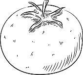 Tomato vector.
