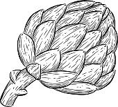 vector of engraving illustration vegetable artichoke on white background