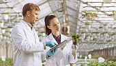 In the Industrial Greenhouse Two Agricultural Engineers Test Plants Health and Analyze Data with Tablet Computer.