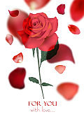 Valentine's Day greeting card with flying rose petals and red rose