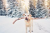 Happy dog in winter nature